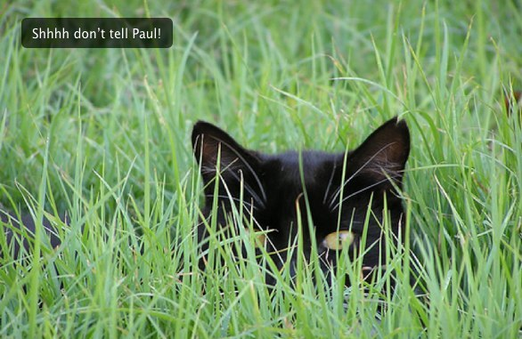 Cat hiding in grass with caption - Shhh don't tell Paul