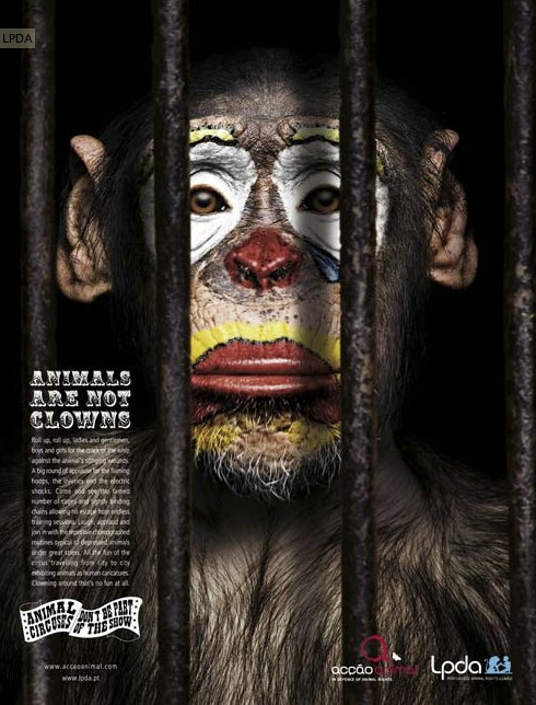 Animals are not clowns